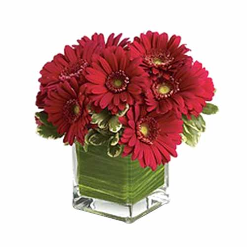 Silky Red Gerberas Arrangement on Valentines Day for Your Loved Ones