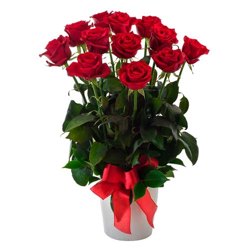 Passionate One Dozen Roses Arrangement in a Pot on Valentines Day