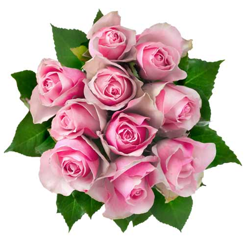 Luminous Bunch of Twelve Pink Roses for Special Ones on Valentines Day